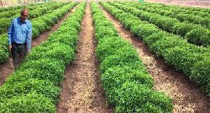 Herbal Farming Consultancy Services