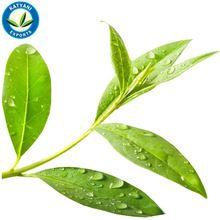 Steam Distilled Tea Tree Oil