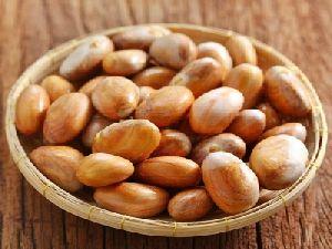 Jack Fruit Seed