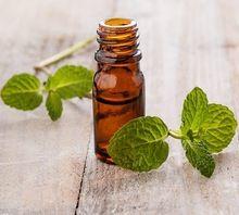 Mentha Piprita Essential Oil