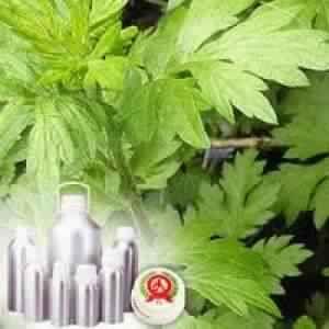 Mugwort Oil