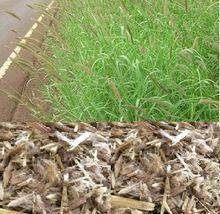 Dinanath Grass Seed