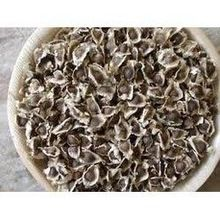 Germination And Plant Production India Seed