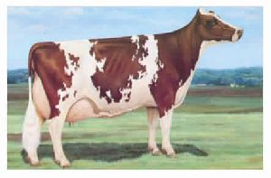 Animal Cattle Feed Supplement