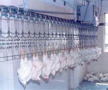 Automatic Poultry Slaughter Plant