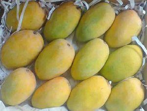Sweet Kesar Mangoes