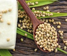 Fresh Common Cultivated Soyabean