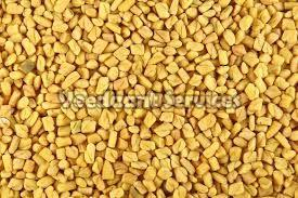 Dry Fenugreek Seeds