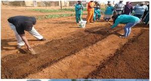Agricultural Soil Development Services