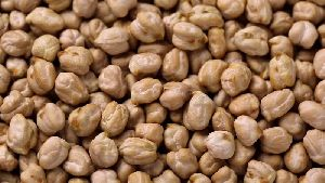 Chickpea Seeds