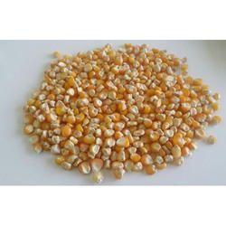 Dried Maize