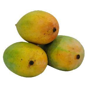 Fresh Gir Kesar Mango