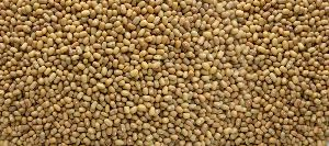 Moth Beans