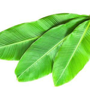 Organic Banana Leaves