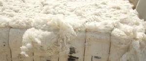 Organic Raw Cotton Bale