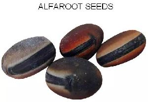 Alfaroot Seed/ Herbal Seeds