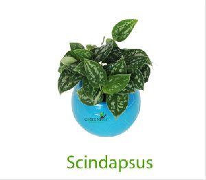 Scindapsus Artificial Plant