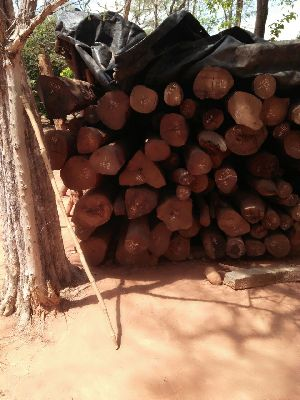 Red Sandalwood - Manufacturers, Suppliers & Exporters in India