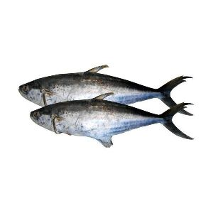 Silver Pomfret Fish & King Fish Manufacturer from Mumbai India