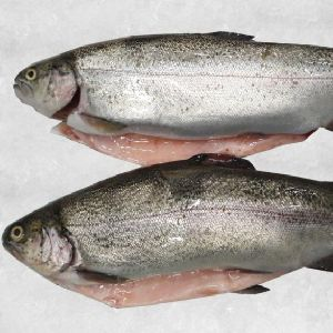Frozen Salmon Trout Fish
