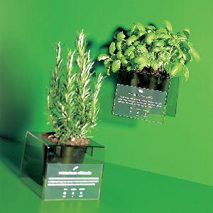 Plant Holder And  Vase