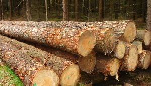 Softwoods