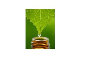 Mentha Citrate Oil