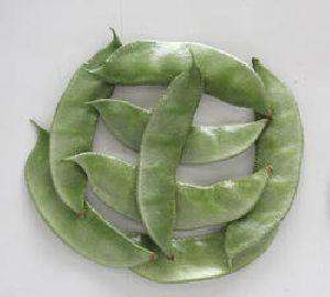 Dollichus Bean Seed