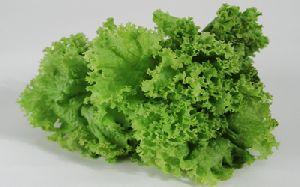 Leafy Iceberg Lettuce