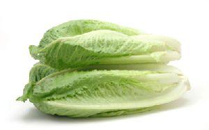 Lettuce - Romaine Green