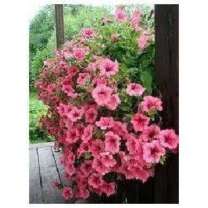 Ornamental Plant
