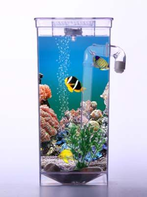 Fun Fish Cleaning Tank Fish Aquarium