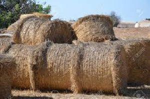 Animal Feed Dried Grass