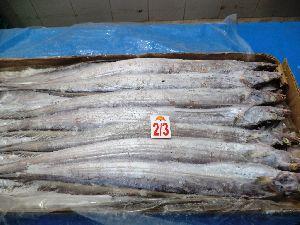 Frozen Ribbon Fish Whole Garde B