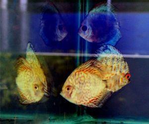 Ornamental Fish Aquatic Plants
