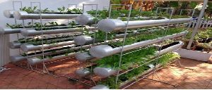Kitchen Gardening Services