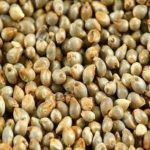 Green Millet Seed