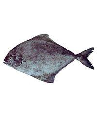 Black Pomfret Fish