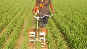 Brush Cutter With Paddy Weeder