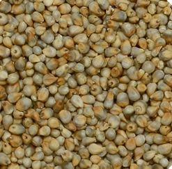 Machine Clean Green Millets