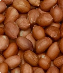 Java 50-60 Peanut Kernels