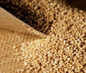 Quinoa - Cereals