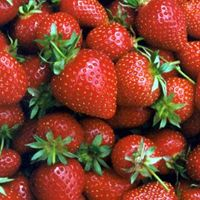 Strawberry Growbags