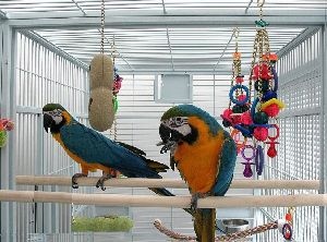 Hybrid macaws Manufacturer in Columbus United States by