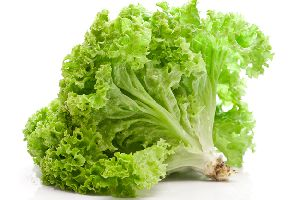 Leafy Lettuce