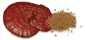 Ganoderma Lucidium