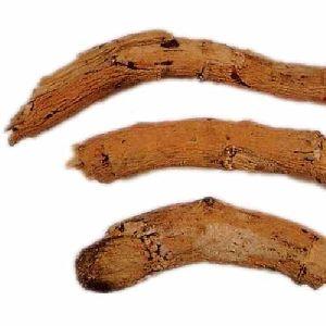 Calotropis Roots