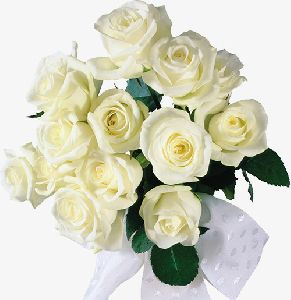 Decorative White Rose