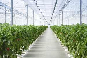 Greenhouse Installation And Technology Service