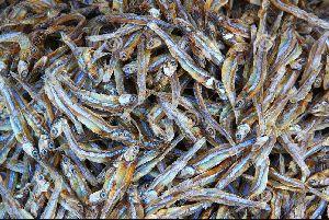 Dried Mandeli Fish